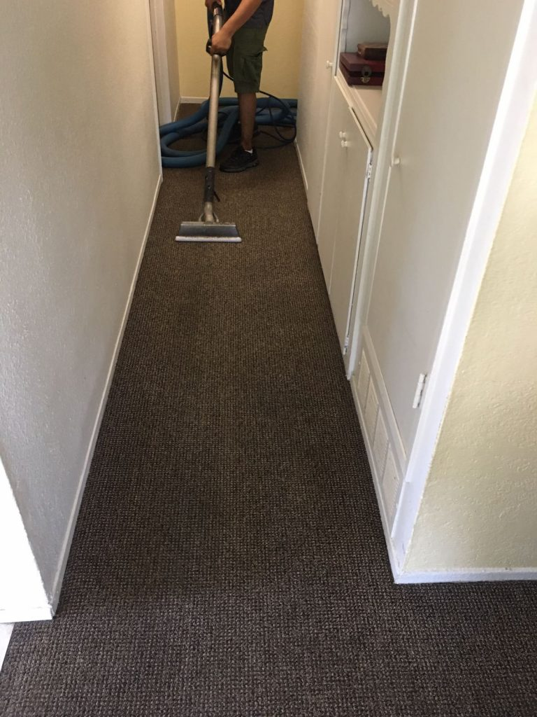 carpet cleaning orange