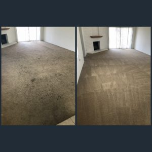 best carpet cleaning service around